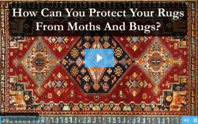 Moth And Bug Protection