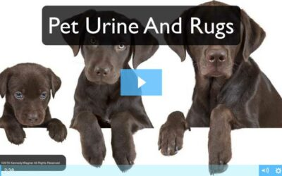 Pet Urine And Rugs